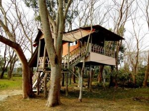 Chilapata Forest Tree House & Tents