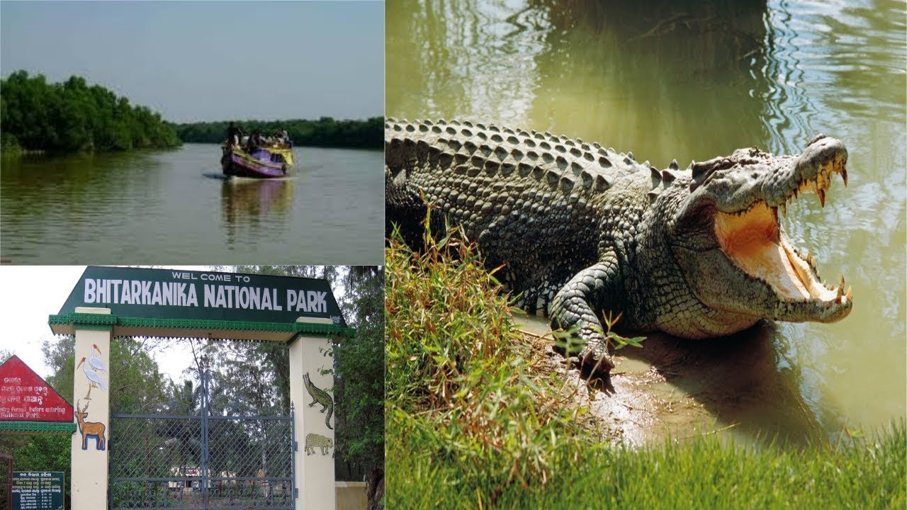 Bhitarkanika Tour Package