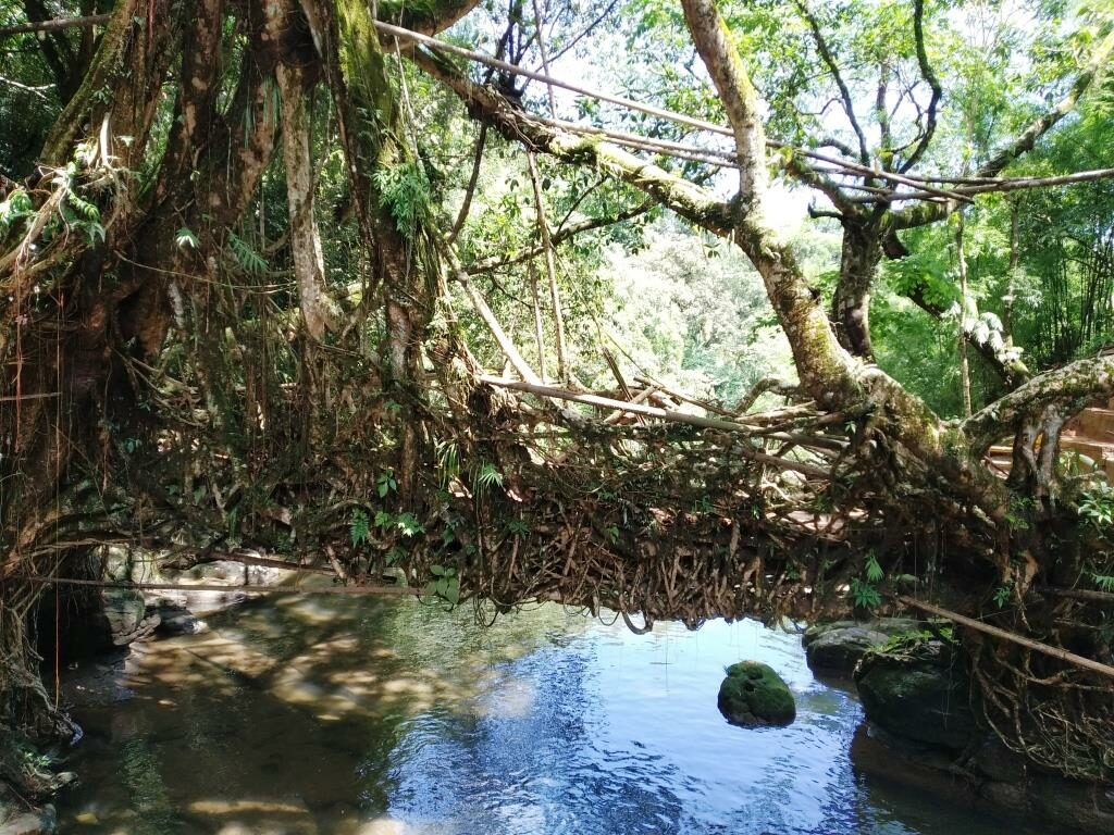 Riwai Living Root Bridge