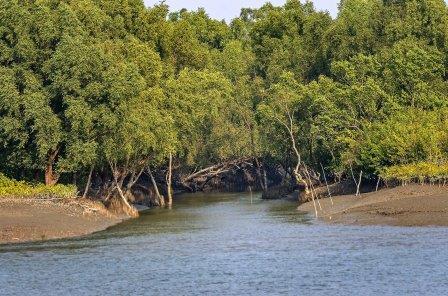 Sundarban forest safari