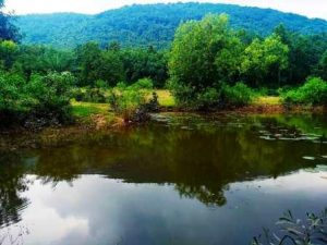 Seulibona Eco Stay,Susunia Hills